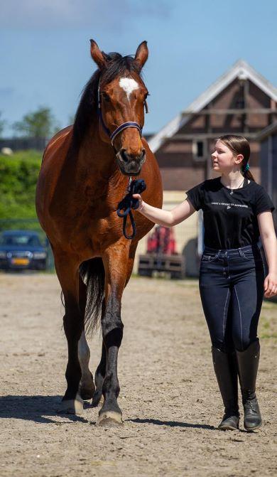 Maandlease Paard